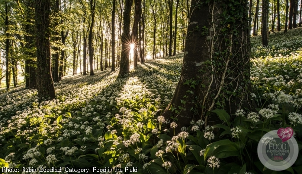Food Photographer of the Year Wild Garlic