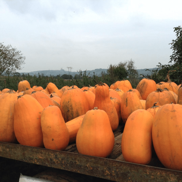 Squash Watch, Pumpkins on truck