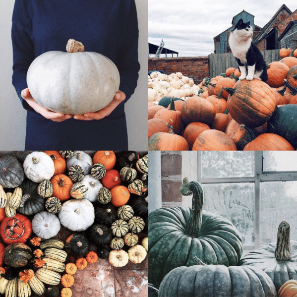Squash Watch, Pumpkins, Instagram #SquashWatch