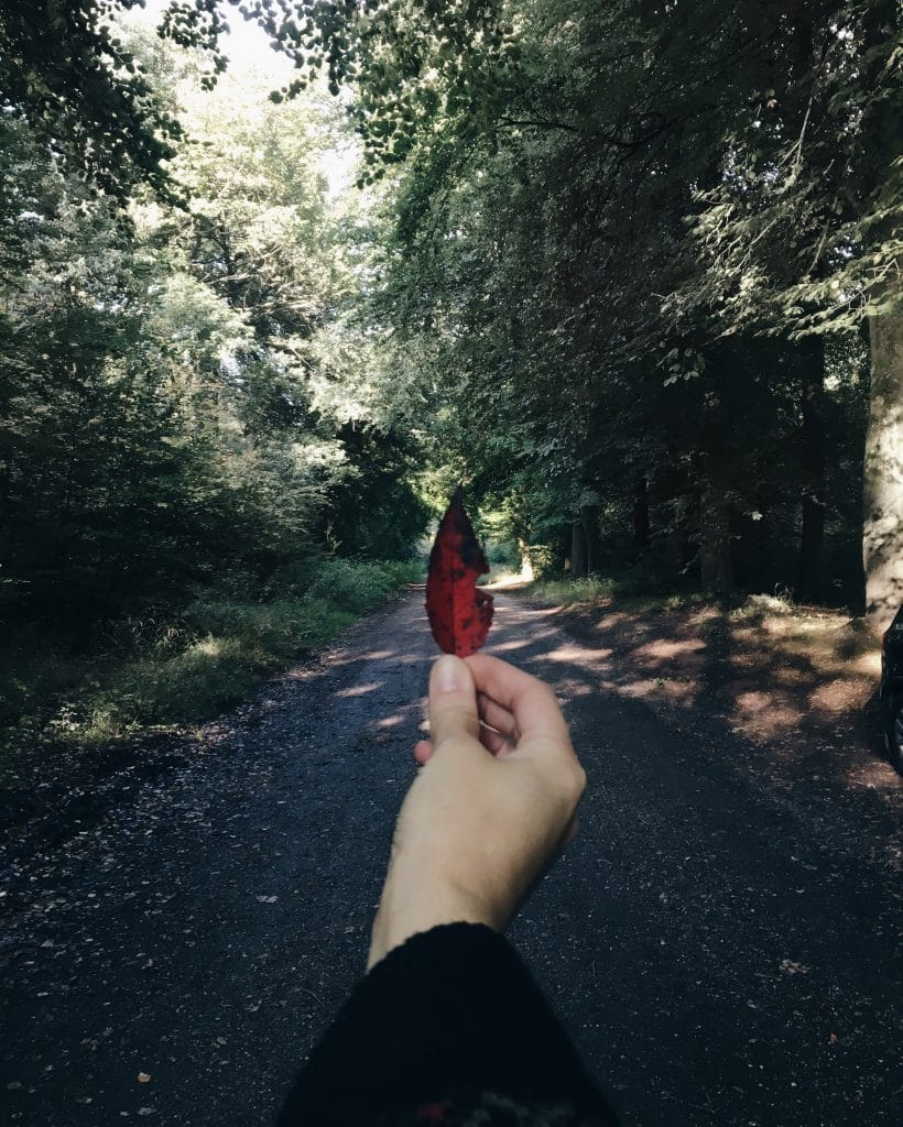 Holding red autumn leaf in the woods