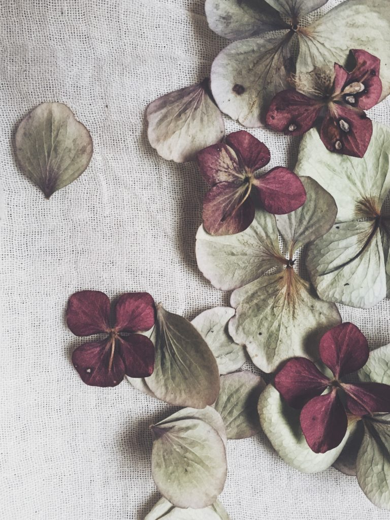 dried hydrangea petals