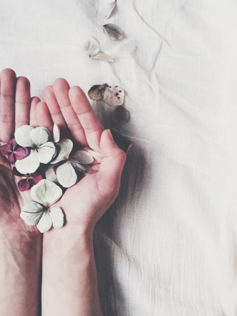 dried hydrangea petals in hands