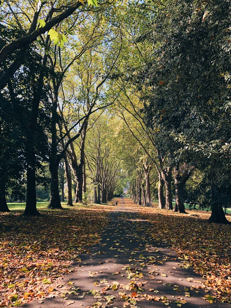 Autumn leaves in a park with a row of trees