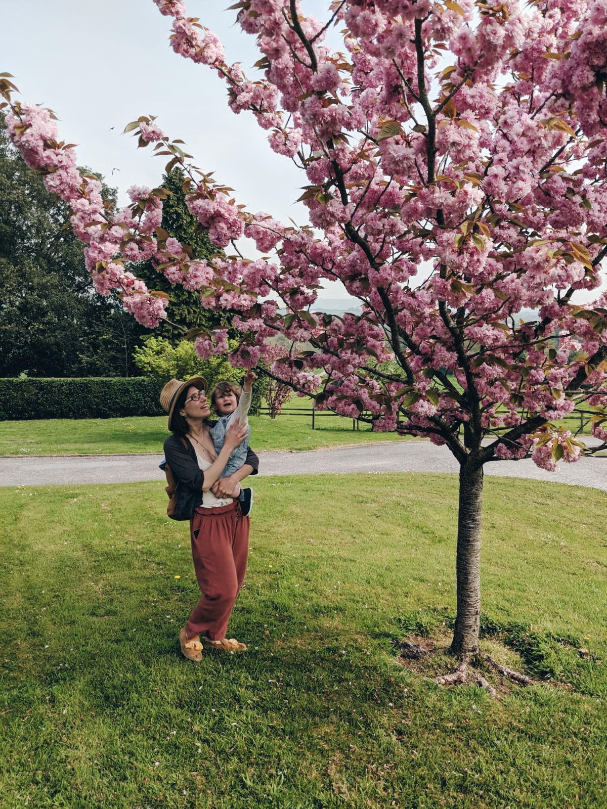 Women standing next to a cherry blossom tree. She has a toddler on her hip and they are both look up at the pink frothy blossom.
